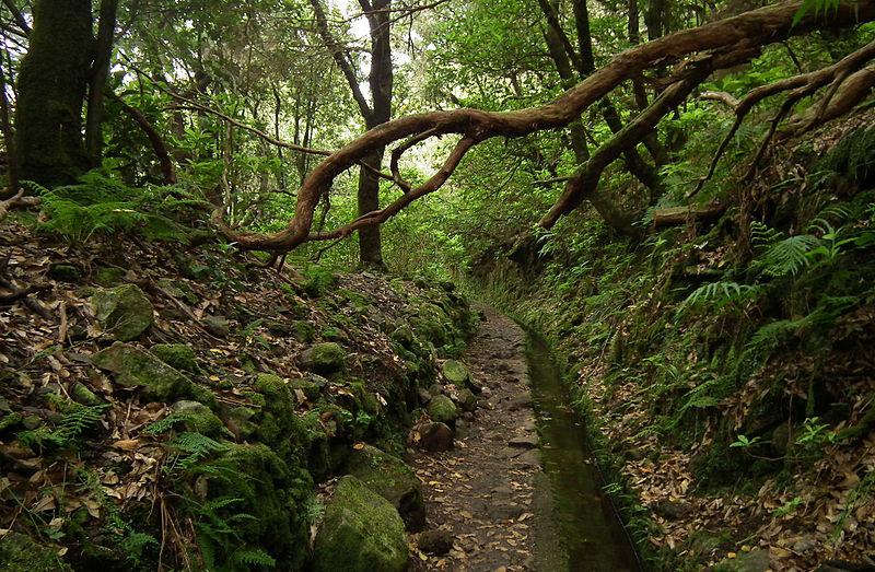 File:Laurissilva da Madeira 10.jpg