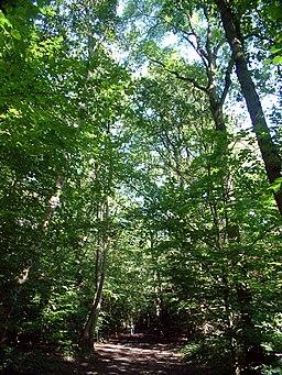 Leafy Grove, Selsdon Wood CR0 - geograph.org.uk - 48625