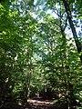 Leafy Grove, Selsdon Wood CR0 - geograph.org.uk - 48625.jpg