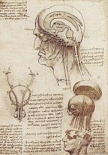 Leonardo Da Vinci Wikipedia