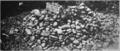 Lewis and Clark salt cairn.png