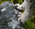 Lichen - a paws-on experience^ - geograph.org.uk - 455105.jpg