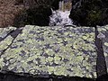 Lichen on bridge - geograph.org.uk - 1779310.jpg