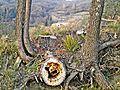 Localita' Docciola-nature 3.jpg