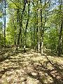 Locatelliwald westlich des Buchbergs sl4.jpg