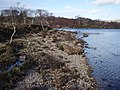 Loch Maree Coastline - geograph.org.uk - 364619.jpg
