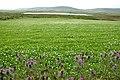Loch of Brockan, Rendall - geograph.org.uk - 516424.jpg
