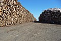 Log stacks in Waternish Forest - geograph.org.uk - 1357203.jpg