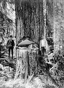 Logging oregon.jpg