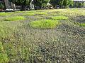 Lone Fir Cemetery, Portland, Oregon (2012) - 17.JPG