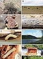 Longhorn beetles (10.3897-zookeys.739.23675) Figure 9.jpg