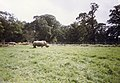 Longleat Safari Park, Warminster (150412) (9456135672).jpg