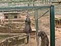Lontras no Parque Biológico da Serra da Lousã.jpg