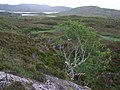 Looking down Allt Bholgair from the deer fence - geograph.org.uk - 1399501.jpg