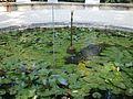 Lorto-botanico-di-padova-2016 27757185784 o 23.jpg
