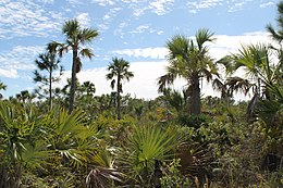 Lucayan National Park Palm Trees.jpg