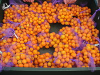 Kumquat - Wikipedia