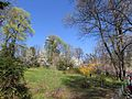Magnolia Fomin2.jpg