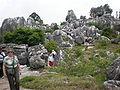 Major Stone Forest NE outer area 7.JPG