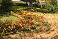 Malta - Attard - San Anton Gardens 13 ies.jpg