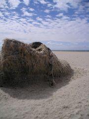 An abandoned shoe, Kåre Sand, Wadden Sea, Denmark