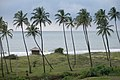 Mandrem Beach, Goa, India.jpg