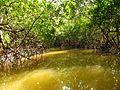 Mangrove Channel - Flickr - treegrow (3).jpg