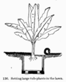 Manual of Gardening fig136.png