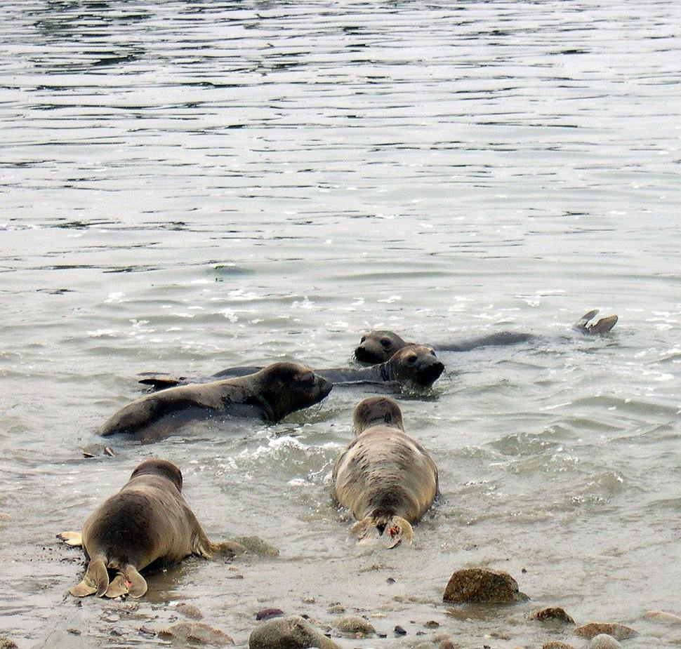 Marine Mammal Center release
