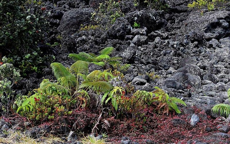 File:Maunakea (24179736570).jpg