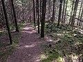 Merv's Trail - panoramio (1).jpg