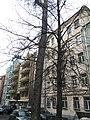 Meshchansky, CAO, Moscow 2019 - 3508.jpg