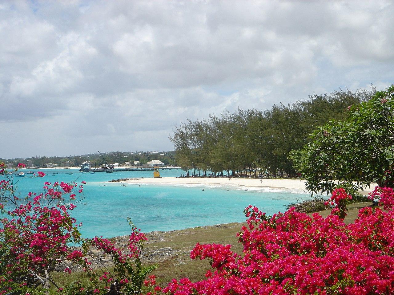 Miami Beach Barbados Seaweed