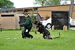 Military working dog 150614-F-XV591-021.jpg