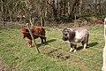 Miniature horses, Old Basing, Hampshire - geograph.org.uk - 367065.jpg