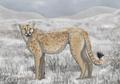 Miracinonyx (american cheetah).png