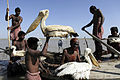 Mohana fishermen hunters use lures from real birds to catch more birds.jpg