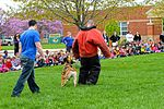 Month of Military Child MWD demonstration 150414-F-OH119-220.jpg