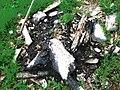 Morceaux de bois en cendres.JPG