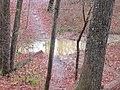 Muck puddle - panoramio.jpg