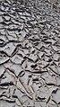 Mud crackes in Magnesite quarry.jpg
