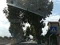 Municipalità di Favaro Veneto 47.jpg