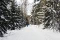 Munkkivuori skiing track January 28 2012 02.png