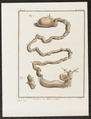 Myrmecophaga didactyla - ingewanden - 1700-1880 - Print - Iconographia Zoologica - Special Collections University of Amsterdam - UBA01 IZ21000047.tif