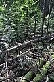 NPR Boubínský prales 20120910 14.jpg