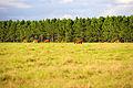 NRCSFL07023 - Florida (715648)(NRCS Photo Gallery).jpg