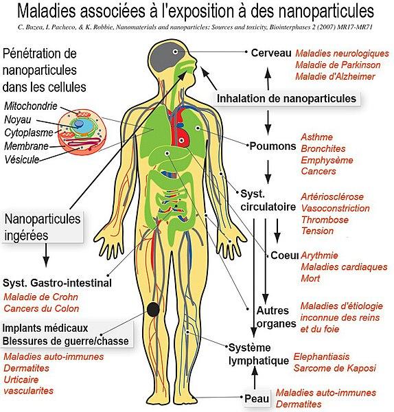File:NanoparticleNanoparticules pictureFr.jpg