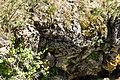 Narcisse Snake Dens 16.jpg