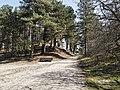 Nationaal Park Kennemerland (39559976810).jpg