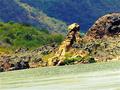 Natureza em Piranhas, Alagoas.png